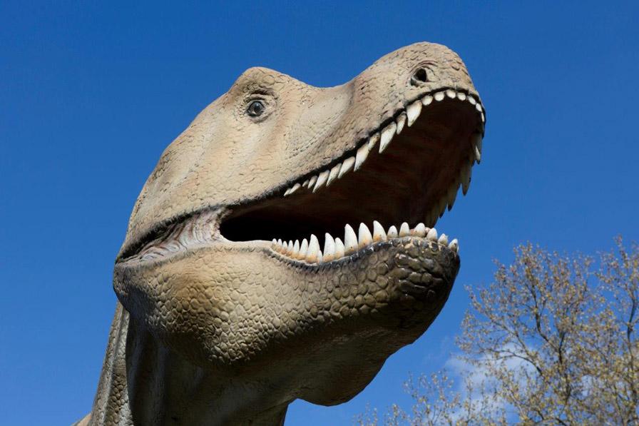 Tyrannosaurus Rex weist schon von weitem auf das Naturmuseum Senckenberg hin, das in diesem Jahr 200 Jahr alt wird.